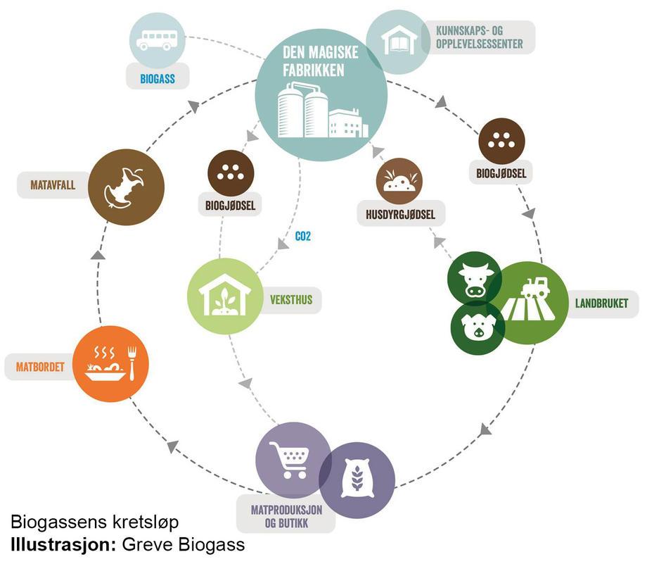 Biogassens kretsløp. Fotograf: Illustrasjon: Greve Biogass