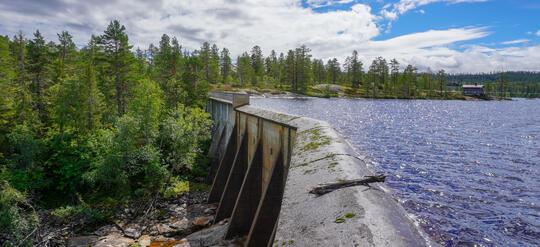 dam vann skog